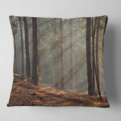 Rays of Sun in Dense Forest Landscape Photo Pillow Size: 16 x 16, Product Type: Throw Pillow