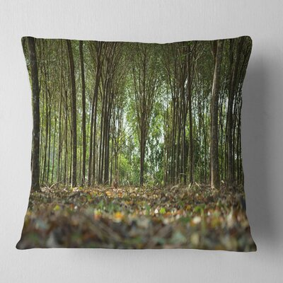 Dense Rubber Tree Plantation Landscape Printed Pillow Size: 26 x 26, Product Type: Euro Pillow