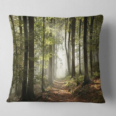 Fall Forest with Sun Rays Landscape Photography Pillow Size: 26 x 26, Product Type: Euro Pillow