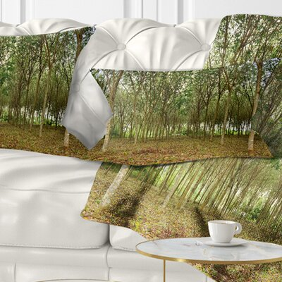 Rubber Tree Plantation During Midday Landscape Printed Pillow Size: 12 x 20, Product Type: Lumbar Pillow
