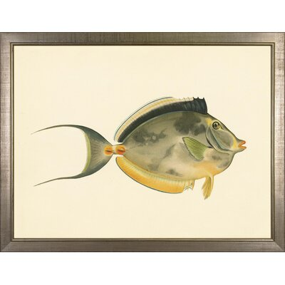North American Fish Framed Painting Print