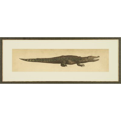 Reptilia Illustrations Framed Painting Print