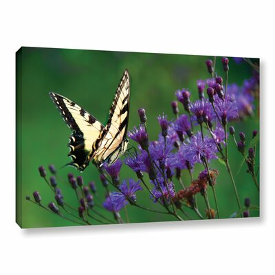 Butterfly on Ironweed Photographic Print on Wrapped Canvas