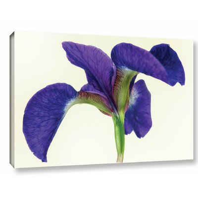 Dancing Iris Photographic Print on Wrapped Canvas Size: 12