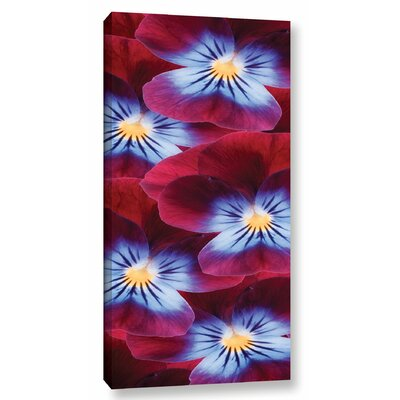 Red Violet Violets by Photographic Print on Wrapped Canvas
