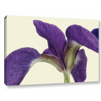 Indigo Iris  Photographic Print on Wrapped Canvas