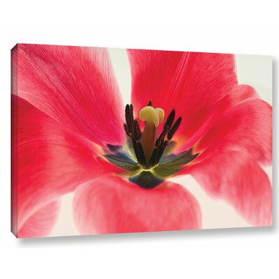 Red Tulip Photographic Print on Wrapped Canvas Size: 12