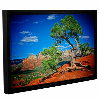 A Tree with a View Framed Photographic Print
