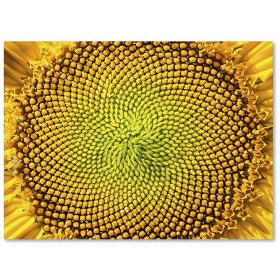 Cosmic Patterns in Nature Photographic Print on Wrapped Canvas