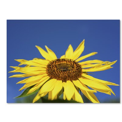 Facing the Sun II Photographic Print on Wrapped Canvas Size: 14