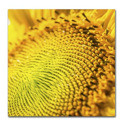 Glistening Sunflower Nectar Photographic Print on Wrapped Canvas