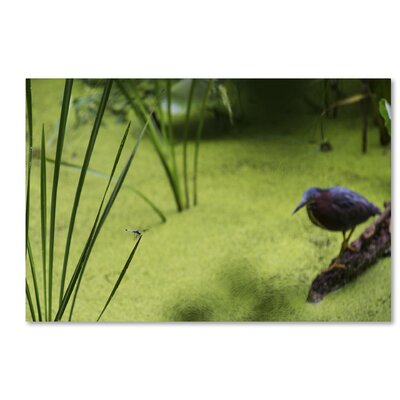 Life in the Marsh Photographic Print on Wrapped Canvas