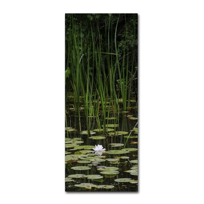 Marsh Lotus Photographic Print on Wrapped Canvas