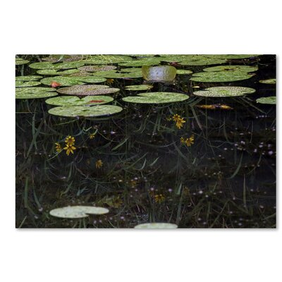 Marsh Reflections Photographic Print on Wrapped Canvas