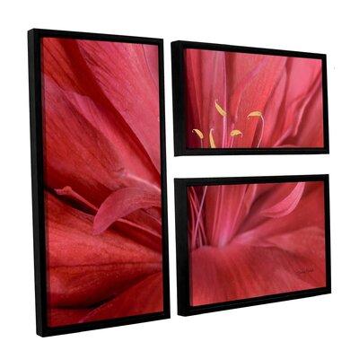 Peonia Insight I 3 Piece Framed Photographic Print on Canvas Set