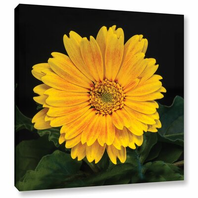 Yellow Blossom Photographic Print on Wrapped Canvas Size: 10