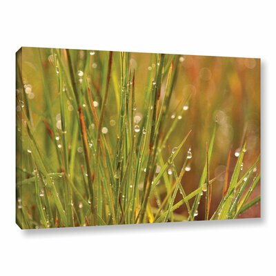 Dewdrops in the Morning Photographic Print on Wrapped Canvas Size: 12