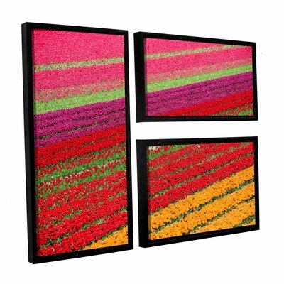 Floral Stripes II 3 Piece Framed Photographic Print Set