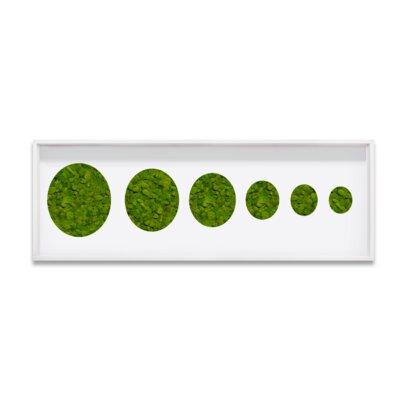 Live Moss Circles Framed Wall Art Size: 10