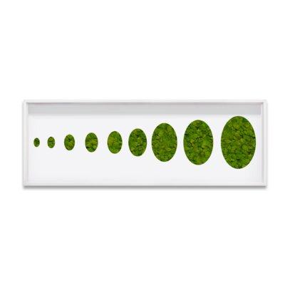 Live Moss Ovals Framed Wall Art Size: 10