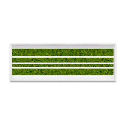 Live Moss Lines Framed Wall Art Size: 10