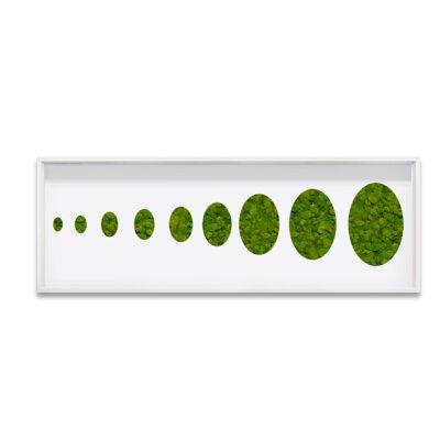 'Live Moss Ovals' Framed Graphic Art Print