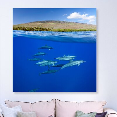 'Split View Dolphins and Island' Photographic Print on Canvas Size: 12'' H x 12'' W x 1.5'' D