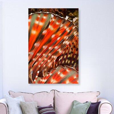 'Zebra Lionfish' Photographic Print on Canvas Size: 15'' H x 10'' W x 1.5'' D