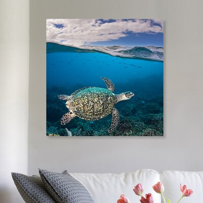 'Hawksbill Turtle' Photographic Print on Canvas Size: 12'' H x 12'' W x 1.5'' D