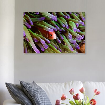 'Anemone Fish' Photographic Print on Canvas Size: 10'' H x 15'' W x 1.5'' D