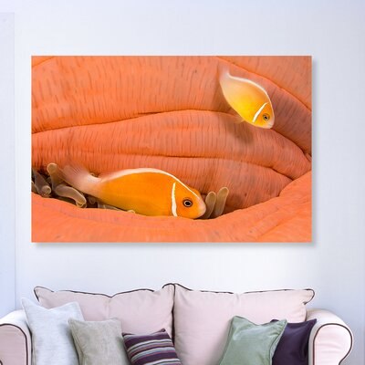 'Peach Anemonefish' Photographic Print on Canvas Size: 10'' H x 15'' W x 1.5'' D