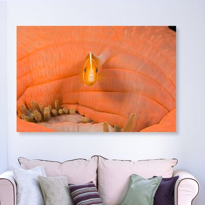 'Peach Anemonefish Close Up' Photographic Print on Canvas Size: 10'' H x 15'' W x 1.5'' D