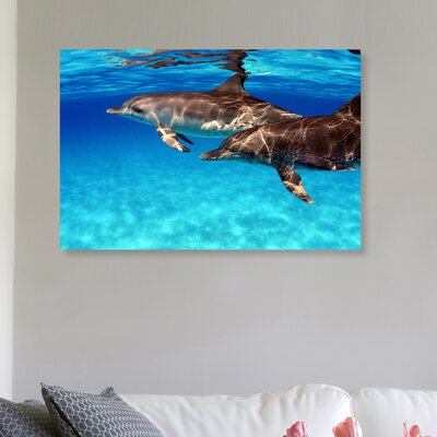 'Atlantic Spotted Dolphin' Photographic Print on Canvas Size: 10'' H x 15'' W x 1.5'' D
