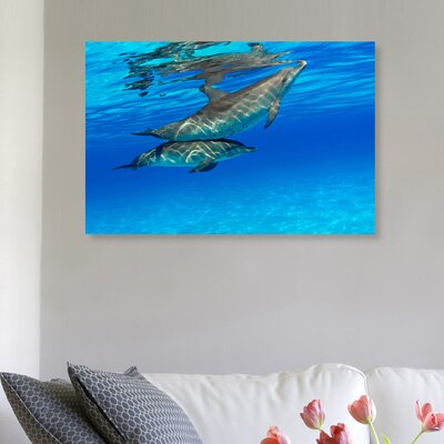 'Atlantic Spotted Dolphin Pair' Photographic Print on Canvas Size: 10'' H x 15'' W x 1.5'' D
