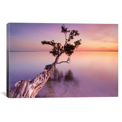 Water Tree XI Photographic Print on Wrapped Canvas Size: 12