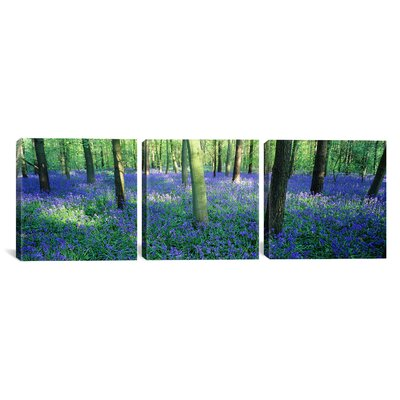 Bluebells Photographic Print on Canvas Size: 12