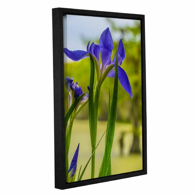 'Purple Iris' Framed Photographic Print on Canvas Size: 12