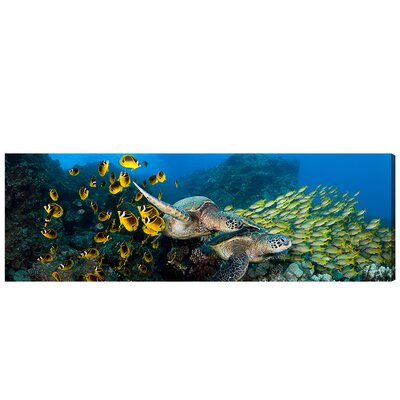 'School of Fish and Turtle' Photographic Print on Canvas Size: 20'' H x 60'' W x 1.5'' D