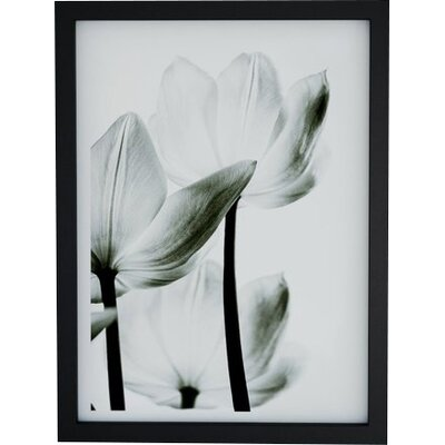 'Translucent Tulips III' Graphic Art Print Format: Black Frame, Size: 24