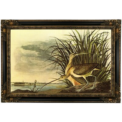 'Long Billed Curlew' Framed Oil Painting Print on Canvas Format: Black/Bronze Framed, Size: 24.25