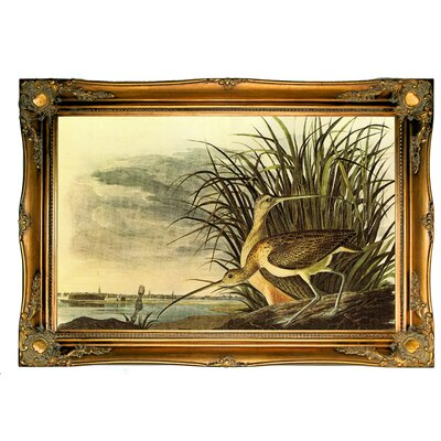 'Long Billed Curlew' Framed Oil Painting Print on Canvas Format: Dark Brown Framed, Size: 24.5