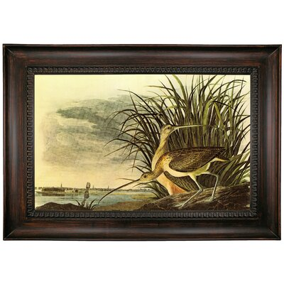 'Long Billed Curlew' Framed Oil Painting Print on Canvas Format: Gold Framed, Size: 26
