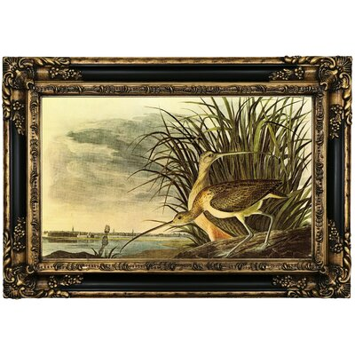 'Long Billed Curlew' Framed Oil Painting Print on Canvas Format: Black/Gold Framed, Size: 17.25
