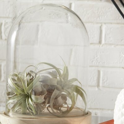 Wood Base Glass Cloche