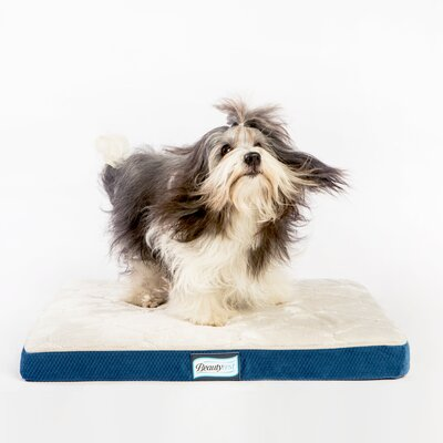 Beautyrest Thera Bed Orthopedic Memory Foam Dog Bed Size: 2 H x 18 W x 24 D