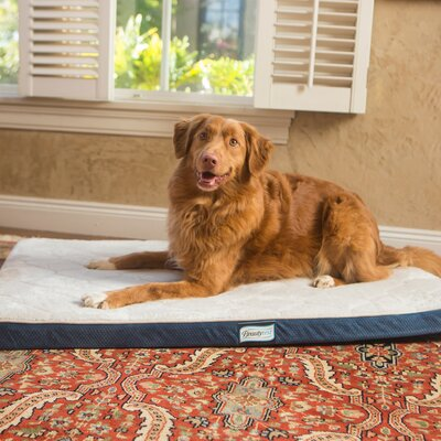Beautyrest Thera Bed Orthopedic Memory Foam Dog Bed Size: 2 H x 28 W x 42 D