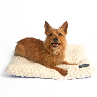 Cesar Millan Ultimate Dog Mat Size: Medium (24 W x 3 D x 18 H), Color: Cream
