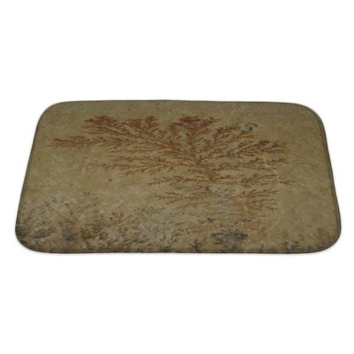 Bravo Close Up of Fossil Ferns Petrified in a Stone Slab Bath Rug Size: Large