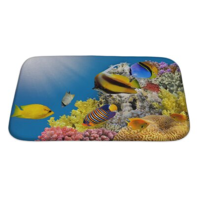 Fish Coral Colony on a Reef Top, Sea, Egypt Bath Rug Size: Large