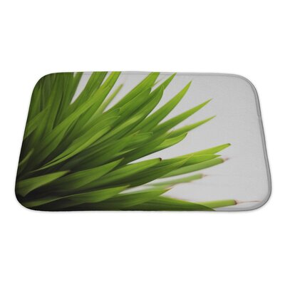 Leaves Closeup of a Leaf Isolated Bath Rug Size: Small